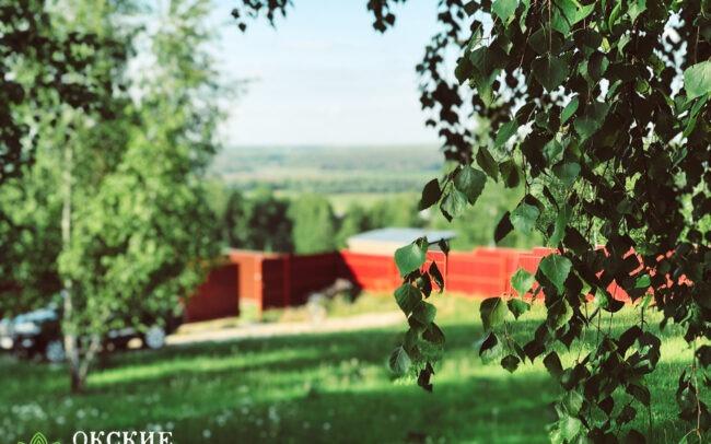 Красивый зеленый участок с лесными деревьями