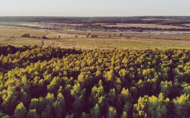 Лесной Участок 19 соток