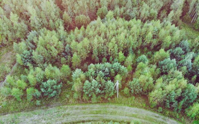 Вид на лесные участки у Оки